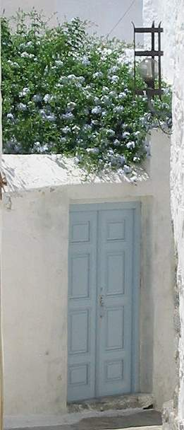 flowers in the houses and gardens of Patmos